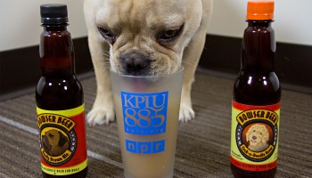 Winston meticulously profiles both the Beefy Brown Ale and the Cock-a-Doodle Brew. (Credit: Justin Steyer)