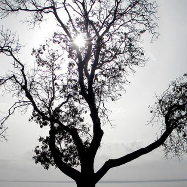 """Tree Alone"""