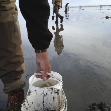 Wader-clad clam diggers dot Long Beach as far as the eye can see. (Rae Ellen Bichell/KPLU)