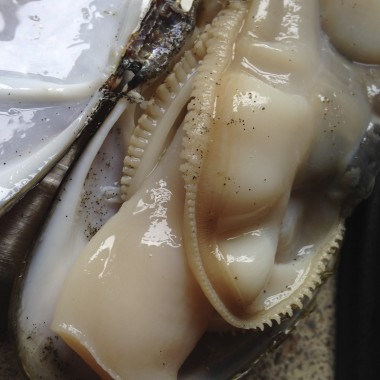 When boiling water is poured on them, razor clams automatically pop open and unzip. (Rae Ellen Bichell/KPLU)