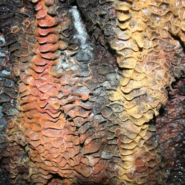 Traces of allophane flowstone. (Martha Kang/KPLU)