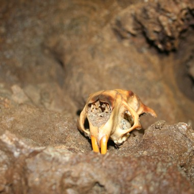 The skull of a marmot past. (Martha Kang/KPLU)