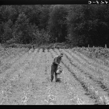 August 1939: Grays Harbor County, northeast of Elma. Hand irrigation on small rented subsistence farm. Family have been on place for one year. (Dorothea Lange/Farm Security Administration)