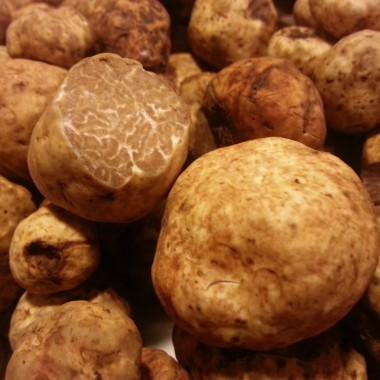 The inside of the Oregon white truffle is marbled. (Courtesy of Truffle Dog Company)