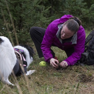 Callie patiently waits as Rosenbach gingerly digs up the truffle.  (Justin Steyer/KPLU)